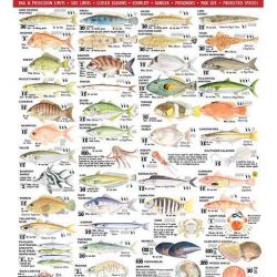 Tasmanian Fish ID Card
