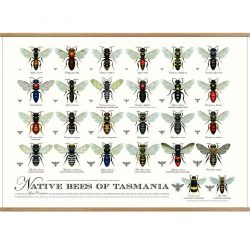Native Bees of Tasmania Poster Print